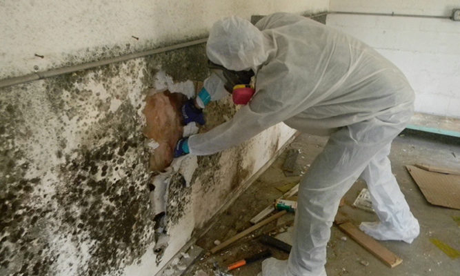 chicago-Mold-Removal