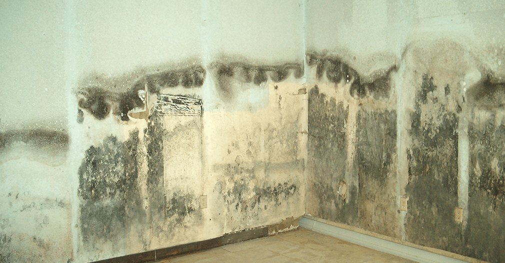 chicago-mold-removal-min